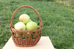 The apples lying in a wattled basket on a table in a garden Stock Photos