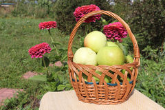 The apples lying in a wattled basket on a table Stock Photos