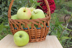 The apples lying in a wattled basket on a table in a garden Stock Photo