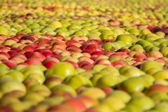 Apples. From a malic market in Kivik Sweden Royalty Free Stock Image