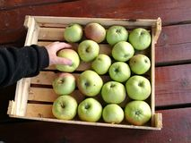 Apples. Many green apples in box Stock Image