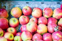 The apples at the market display stall. Apples at the market display stall royalty free stock photography