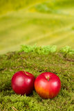 Apples on moss Stock Photos