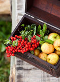 Apples and mountain ash. In a suitcase Royalty Free Stock Images