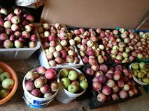 Apples. Much different apples in boxes Royalty Free Stock Image