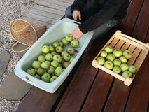Apples. Much green apples in box Royalty Free Stock Photography
