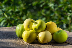 Apples. Natural rustic apples on wooden table in garden Stock Photo