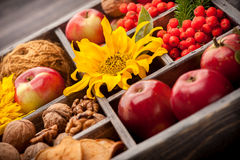 Apples, nuts, flowers sunflowers Stock Images