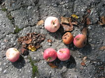 Apples On The Ground Stock Photos