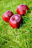 Apples over grass Royalty Free Stock Images
