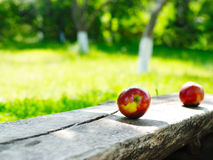 Apples on the park bench Stock Images