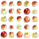 Apples pattern. Seamless pattern of apples painted with watercolours Royalty Free Stock Photography