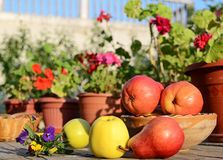 Apples and pears. Green apples and red pears on picnic table Stock Photos