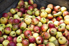 Apples and Pears. At a local market in Europe Royalty Free Stock Photography