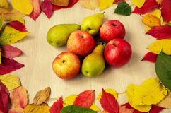 Apples and pears with leaves Royalty Free Stock Image