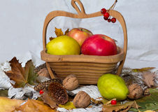Apples, pears and nuts in the basket. Autumn Still Life royalty free stock images