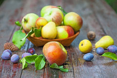 Apples, pears and plums Stock Photography