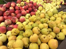 Apples and pears. Red and yellow apples Royalty Free Stock Photo