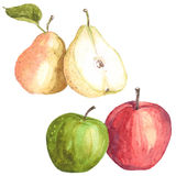 Apples and pears. Watercolor illustration of fruits, apples and pears Stock Photos