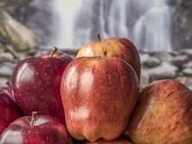 Apples in pile Stock Photo
