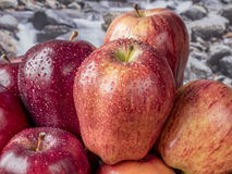 Apples in pile Royalty Free Stock Image
