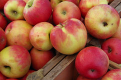 Apples piled in wooden crate. For farmers market Stock Image
