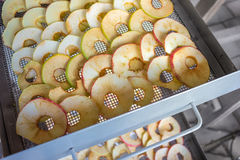 Apples are placed in a dryer. The apples are sliced and placed in a dryer royalty free stock photo