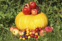 Apples, plums and alycha on pumpkin Royalty Free Stock Images