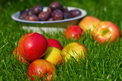 Apples and plums on the lawn Stock Images