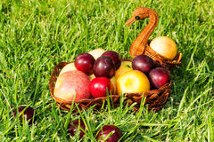 Apples and plums. Apples and plums in a wicker basket on the grass royalty free stock photo