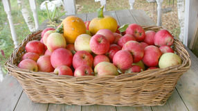 Apples and pumpkins Stock Image