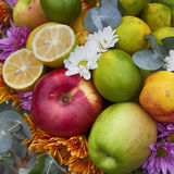 Apples, quinces and lemons, together with eucalyptus and daisies on the table Stock Photography