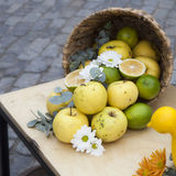 Apples, quinces and lemons, together with eucalyptus and daisies on the table Stock Images
