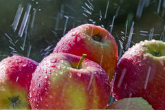 Apples in the rain. Fresh colourful apples with rain Stock Photos