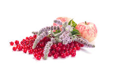 Apples, red currant and mint Royalty Free Stock Image