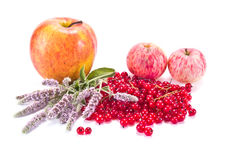Apples, red currant and mint Royalty Free Stock Photos