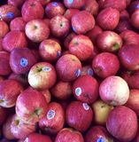 Apples. Red fruit Royalty Free Stock Photography