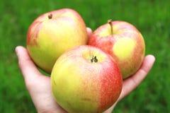 Apples Stock Photos