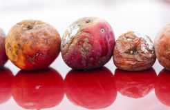 Apples red rotting aging apple old dry. Fruit Royalty Free Stock Photos