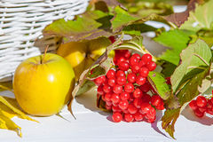 Apples and red viburnum Stock Photo