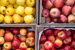 Apples red yellow crate box. On the countryside market stock photos