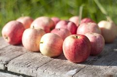 Apples. Ripe apples on wooden table over green bokeh background Royalty Free Stock Images