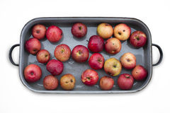 Apples in roaster Stock Images