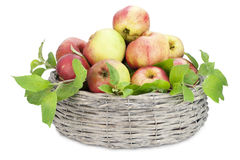 Apples  in round basket Royalty Free Stock Images