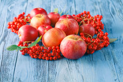 Apples and rowan berry. Autumn still life. Stock Photo