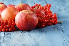 Apples and rowan berry. Autumn still life. Stock Image