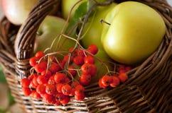 Apples and rowan Royalty Free Stock Photography