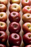 Apples in rows. Red apples in rows over wood plank royalty free stock images