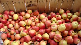 Apples for Sale stock photography
