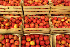 Apples in selling crates on market Stock Image